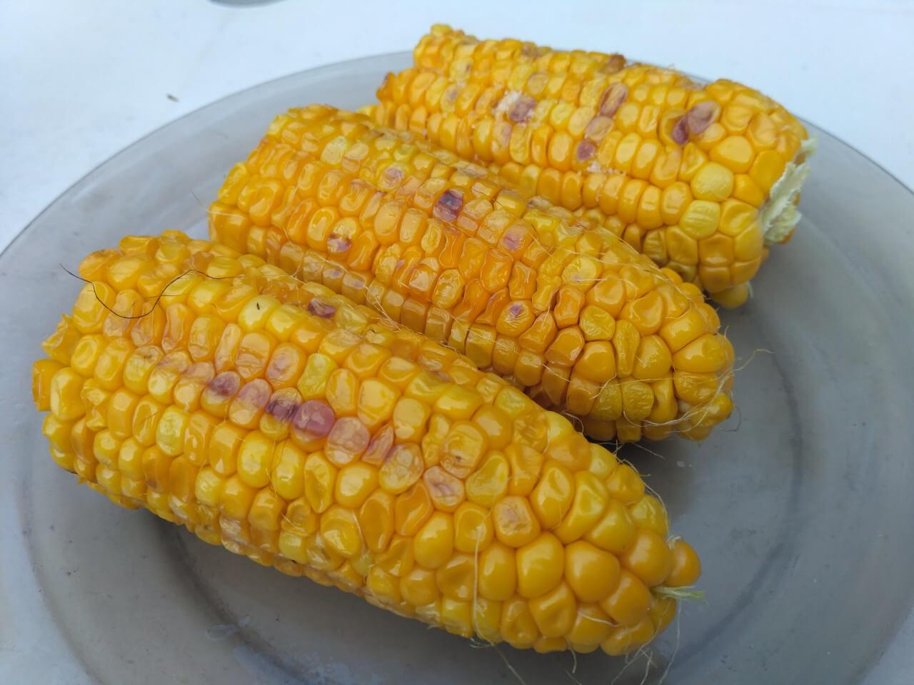 Grilovaná kukurica recept